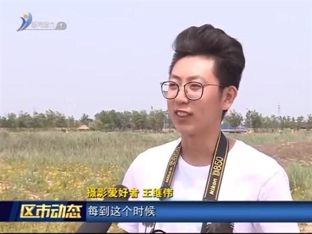 南海新区:金花河湿地公园花海争艳