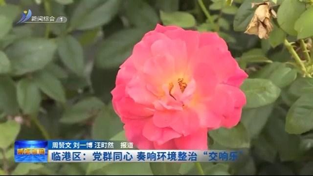 """临港区:党群同心 奏响环境整治""""交响乐"""""""