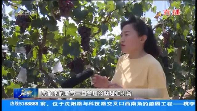 中国农民丰收节暨第九届威海汪疃葡萄文化旅游节开幕
