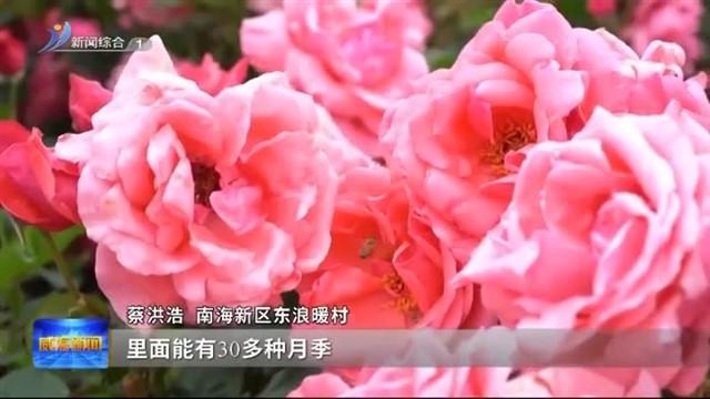 """南海新区东浪暖村:精致乡村有""""面儿""""更有""""里儿"""""""