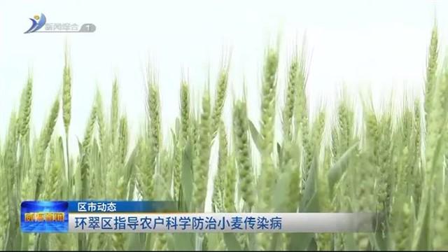 环翠区指导农户科学防治小麦传染病