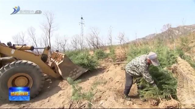 张海波现场督导植树造林 森林防火和松材线虫病防治工作